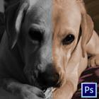 Colorindo fotos preto e branco com o Photoshop