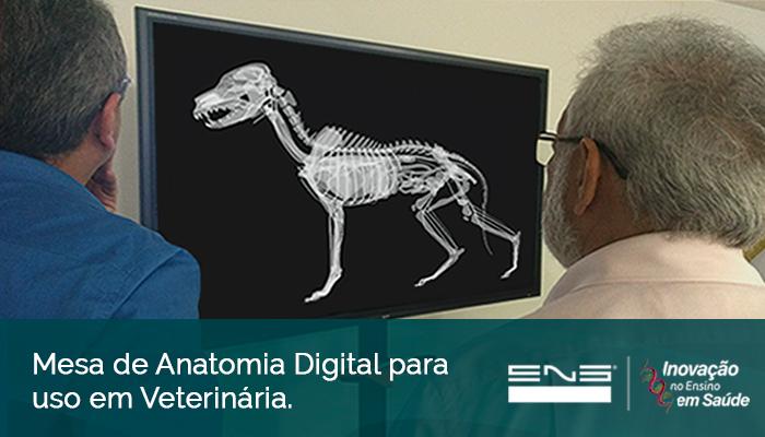 Mesa de Anatomia Digital para uso em Veterinária